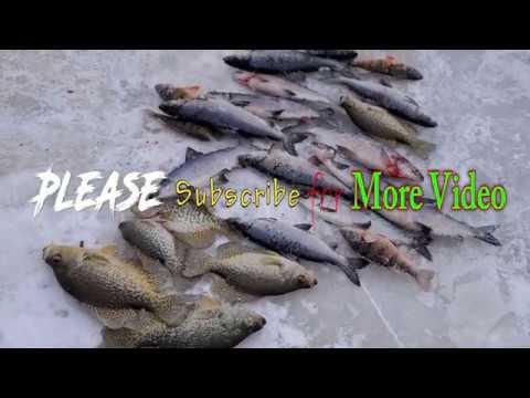 Tullibee Fishing In MN 2020