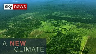 The threat to the Amazon rainforest l A New Climate
