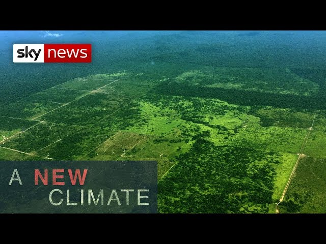Threat to the Amazon rainforest l A New Climate