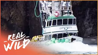 Risking it all: Alaska and the English Channel [Extreme Fishing Documentary] | Wild Things