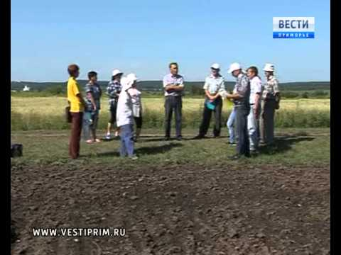 Учёные Приморского НИИ сельского хозяйства выращивают 230 сортов картофеля