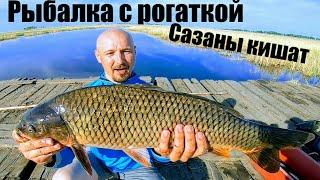 Рыбалка с рогаткой в России рогатка с aliexpress для рыбалки Сазан кишит Рыбалка сазан Рыбалка