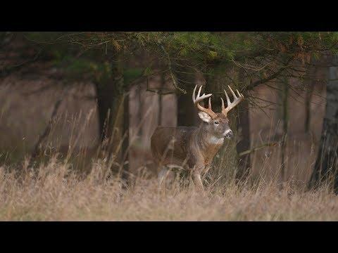 4 Free Methods To Improve Deer Hunting Land