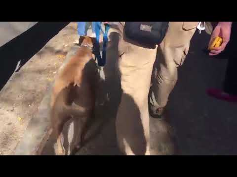 Dog Training | Merlin's in for a refresher course | Solid K9 Training Dog Training