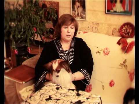 СОБАКИ ПОРОДЫ ПАПИЙОН / PAPILLON DOGS