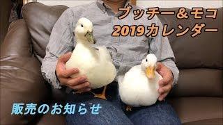 ブッチー&モコ 2019年カレンダー販売のお知らせ