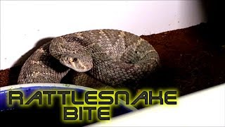New rattlesnake morph?  Never been seen before Western diamondback!