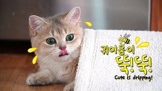 고양이들 혼자놀 때 내뿜는 귀여움 대결~!