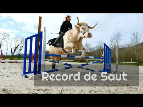 Aston bat son record de saut d'obstacles