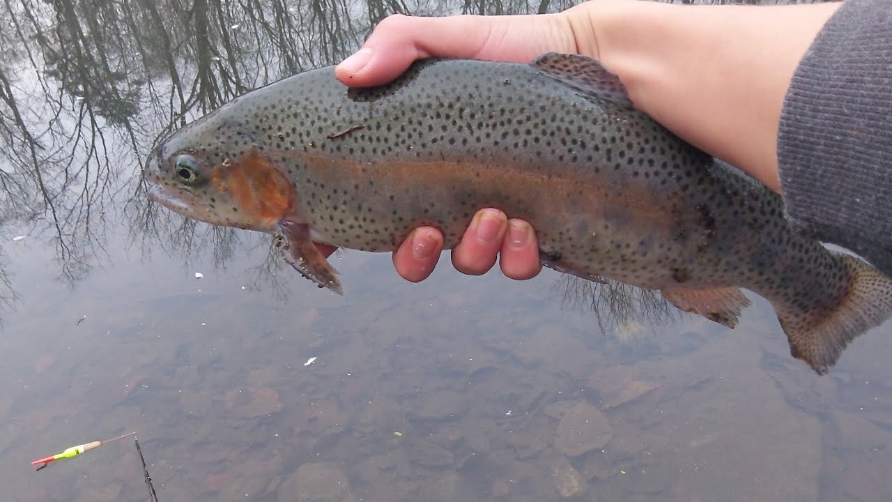 Nj winter trout fishing 2012 youtube for Trout fishing nj