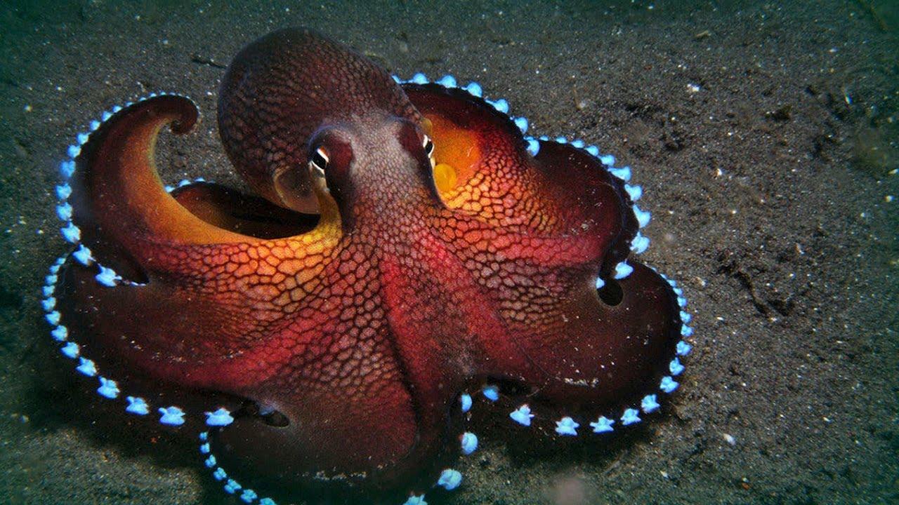 Resultado de imagen de octopus