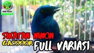 Suara Burung SELENDANG BIRU Gacor LANTANG FULL VARIASI