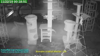 Animal Shelter Bonaire Live Stream