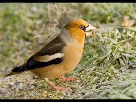 Les oiseaux dans la charmille natalie dessay mp3