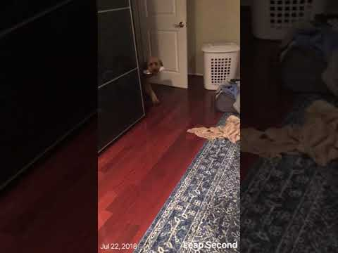 Watch this dog's adorable nightly ritual