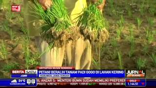 Petani di Kebumen Beralih Tanam Padi Gogo