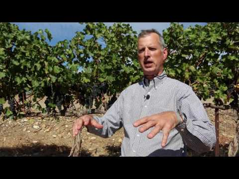 Washington's Columbia wine valley geology & formation: interview with winemaker Co Dinn