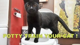 Potty Train your Cat! | Phase 1 & 2