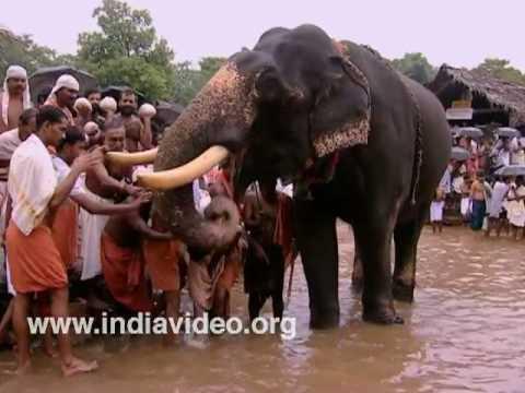 Kannur Akkare Kottiyoor Temple - Elephant Feeding, Kerala, Dakshina Kasi, India