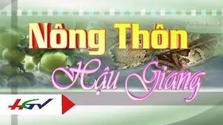 Kỹ thuật thuần lươn và nuôi lươn trong bể lót bạt | HGTV