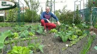 Gartentipp Mai 0503 Erfolgreich Schnecken bekämpfen