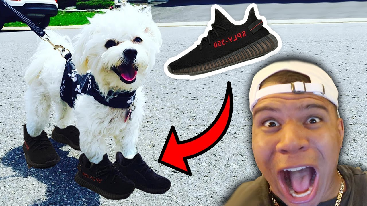 I Bought My Puppy Yeezys 3000 Super Rare Shoes Youtube