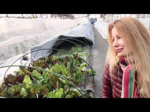 Adeyto LIVE Harvesting Organic Vegetables @ Ishinomaki Small Farm FUKUSHIMA