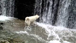 毎度おなじみの滝と戦うクースケです。 滝に頬を張り倒されても向かって...