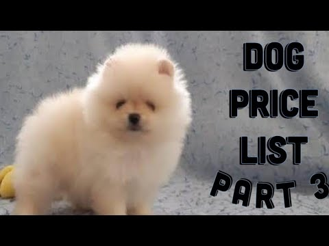 Dog price List in India [2019] | Puppy price list | Puppy Price In India
