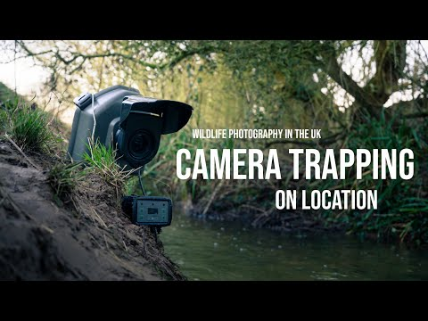 DSLR Camera Trapping In The UK | WILDLIFE PHOTOGRAPHY On Location