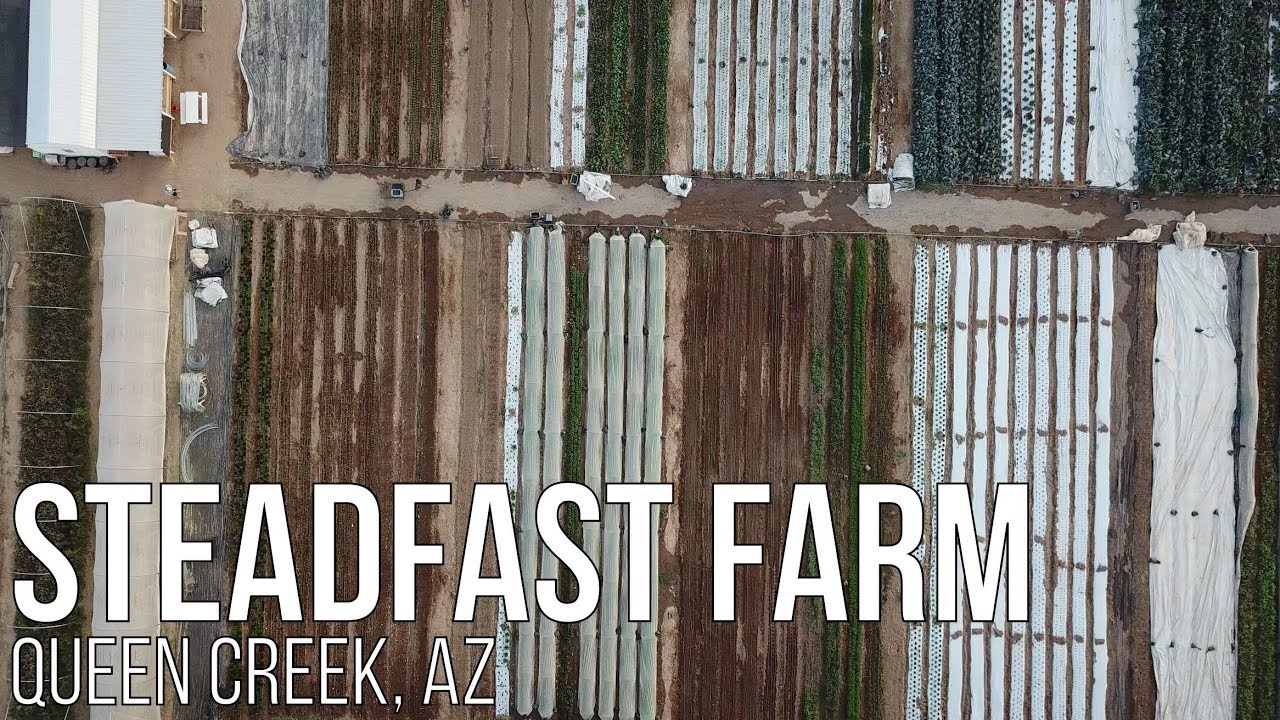 branding and marketing with steadfast farm