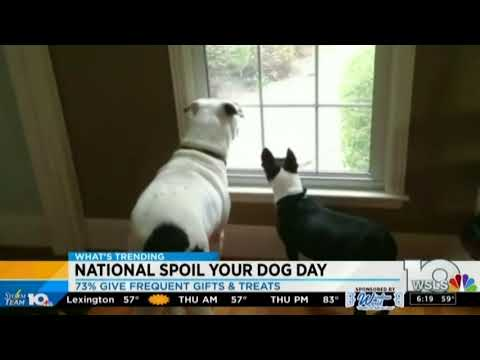 National Spoil Your Dog Day — WSLS 08 10 2017