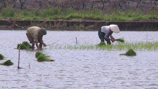 Tin Thời Sự Hôm Nay (6h30 - 22/7): Mưa Lũ Lụt Kéo Dài Gây Nên Nhiều Thiệt Hại Cả về Người và Của