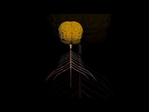 การถ่ายทอดกระแสประสาทระหว่างเซลล์ประสาท วิทยาศาสตร์ ม.4-6 (ชีววิทยา)