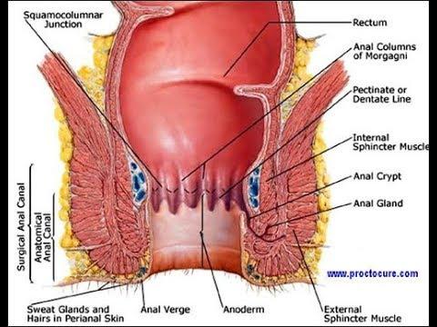 Closeup of penis in pantyhose