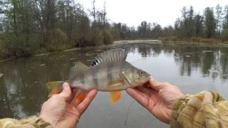 Рыбалка на малых реках Черноземья. Джиг. Щука. Окунь.