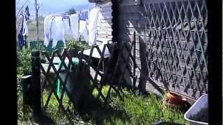 Il mio giardino stà rinascendo