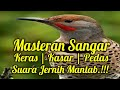 Masteran Speed Rapat Berjeda  Mp3 - Mp4 Download