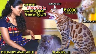 EXOTIC PERSIAN CATS LEOPARD CAT for Sale| Cheapest Price | Kittens For Sale PART - 1