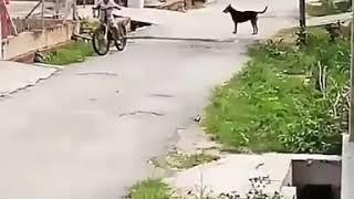 Manusia vs anjing