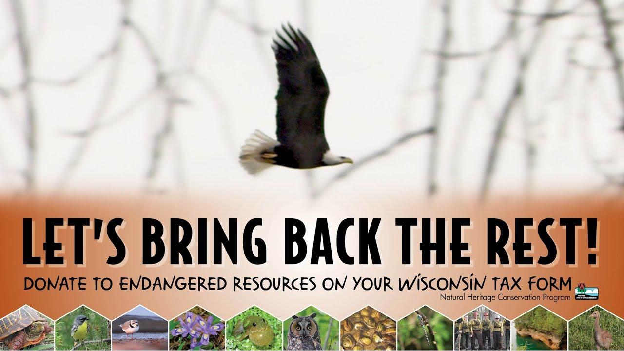 Wisconsin's rare animals - Wisconsin DNR