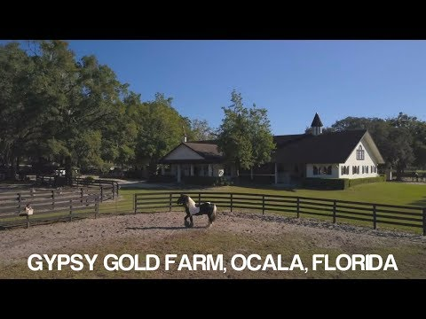 Florida Travel: Visit the Famous Gypsy Vanner Horses in Ocala