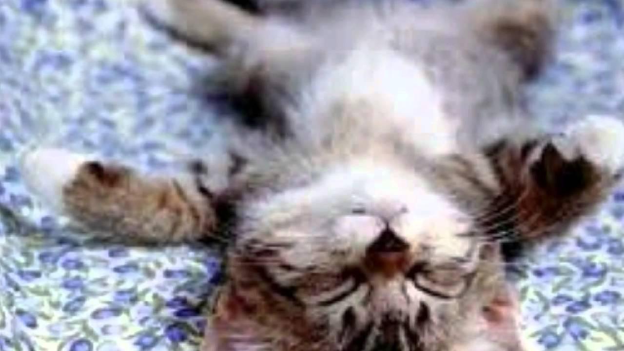 katzen und hunde mix  youtube