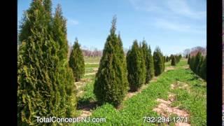 Allenhurst Green Giant Arborvitae by totalconcepts-nj.com