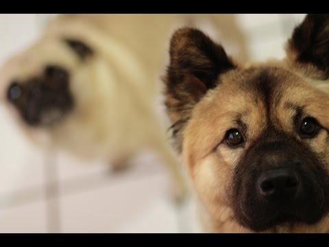 Ekspresi Anjing Setelah Sekian Lama Tidak Ketemu Pemiliknya