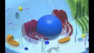 Строение клетки подробная анимация