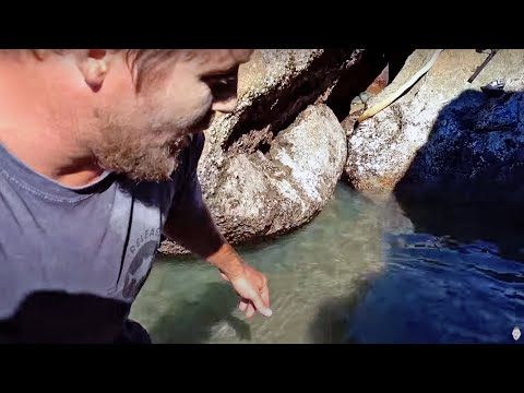Catching Tropical Fish for Lunch CHALLENGE!!