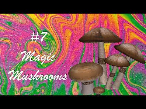 The History of Magic Mushrooms [HD]