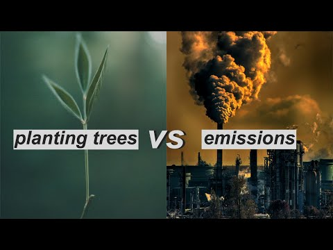 THE IMPACT OF CARBON OFFSETTING // Are CO2 Compensation And Planting Tree Projects Legit?