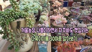 겨울농장나들이하면서 자꾸봐도 헷갈리는 다육이이름 30여종 알아보기(feat.다육마을) succulents name
